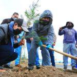 Siembra de árboles por el Día Mundial del Ambiente