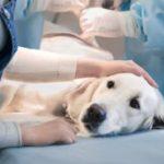 Campaña 'Chócale la Patita' esteriliza a perros y gatos callejeros