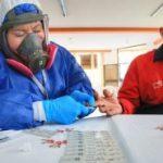 Toma de pruebas covid-19 en barrios urbanos del cantón Ambato.