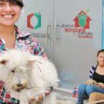 Municipalidad construirá Centro de Gestión Integral de Fauna Urbana