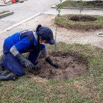 Municipalidad impulsa plantación de árboles en los barrios de la ciudad