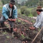 Municipalidad de Ambato fortalece la agro producción a través de estrategias